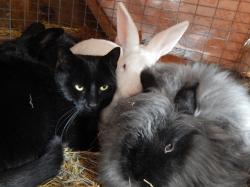 -Allison(Jinx & bunnies, room) 001 (1280x960)