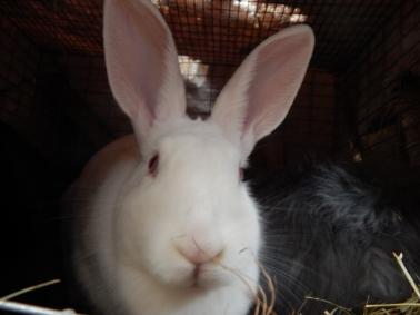 -Allison(Jinx & bunnies, room) 010 (1280x960)