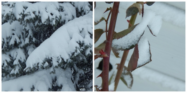 snow 8 (1280x640)