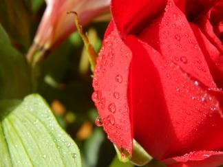 -Allison(rose photoshoot) 026 (1280x960)
