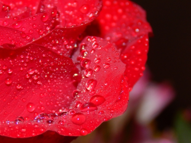 -Allison(rose photoshoot) 049 (1280x960)