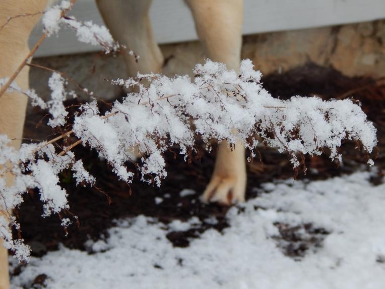 Allison(snow, bookmark) 039 (1280x960)