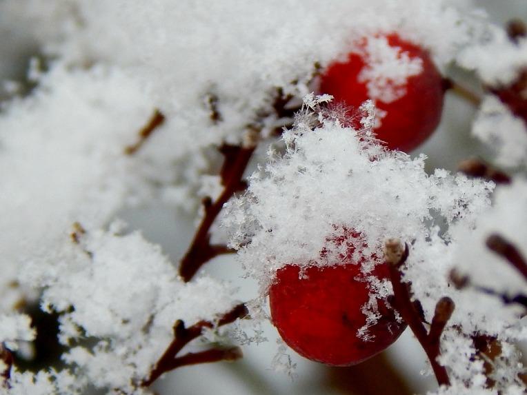 edited berries (1280x960)