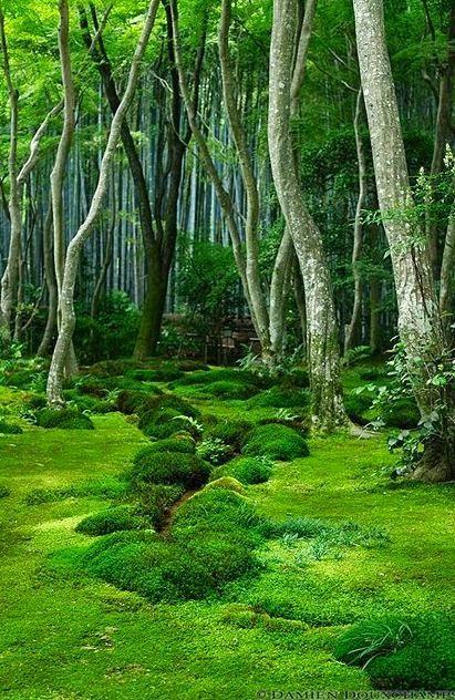 mossy path (411x632)