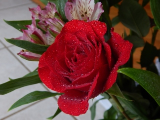 rose (2) (1280x960)