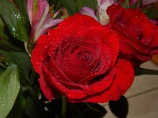 rose (3) (1280x960)