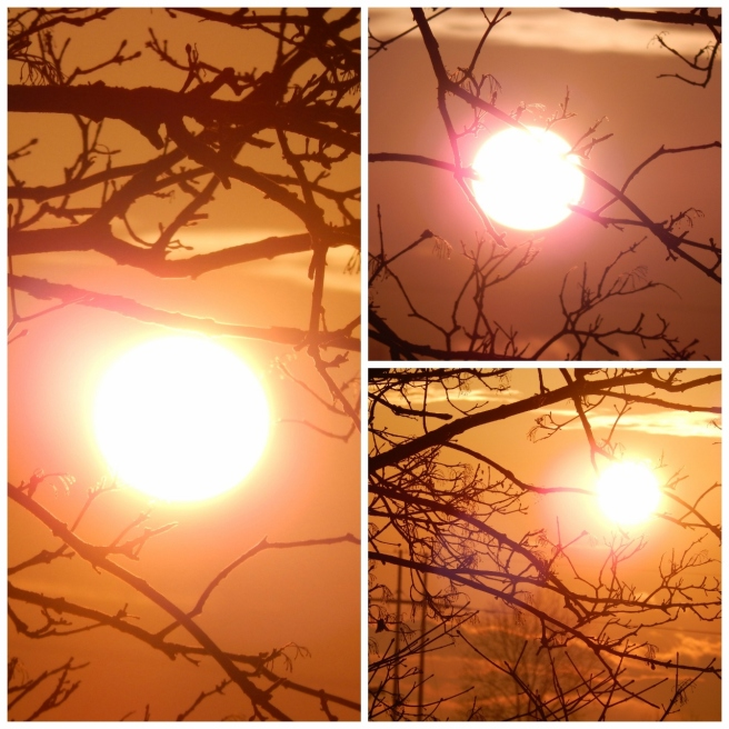 sun collage 1 (1280x1280)