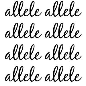 allele