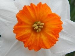 -Allison(cake, daffodils) 003 (1280x960)