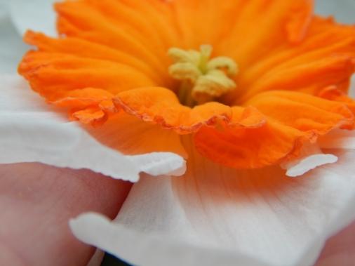 -Allison(cake, daffodils) 006 (1280x960)
