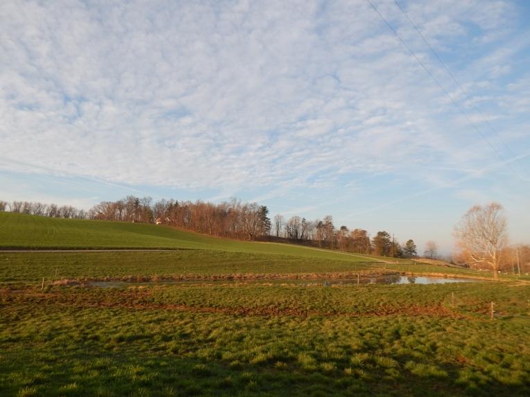 -Allison(pond, geese) 001 (1280x960)