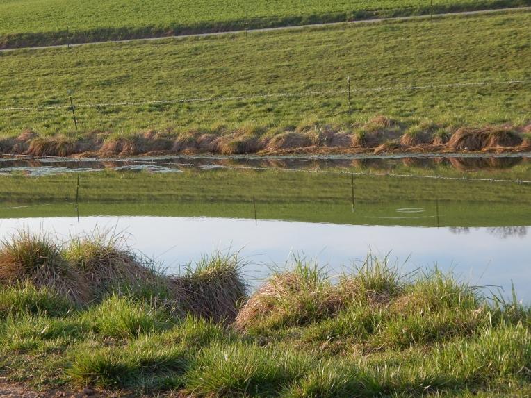 -Allison(pond, geese) 010 (1280x960)