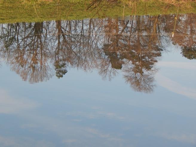 -Allison(pond, geese) 012 (1280x960)