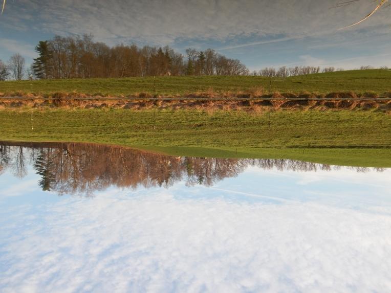 -Allison(pond, geese) 016 (1280x960)