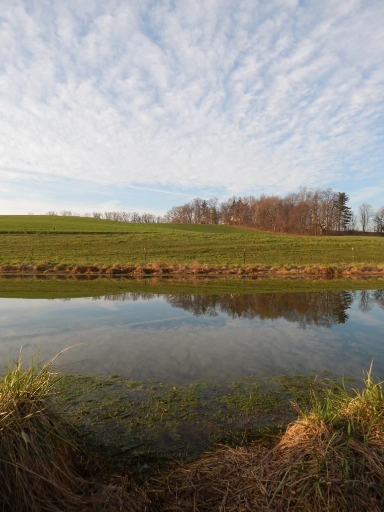 -Allison(pond, geese) 017 (1280x960)