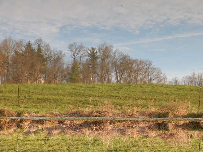 -Allison(pond, geese) 018 (1280x960)