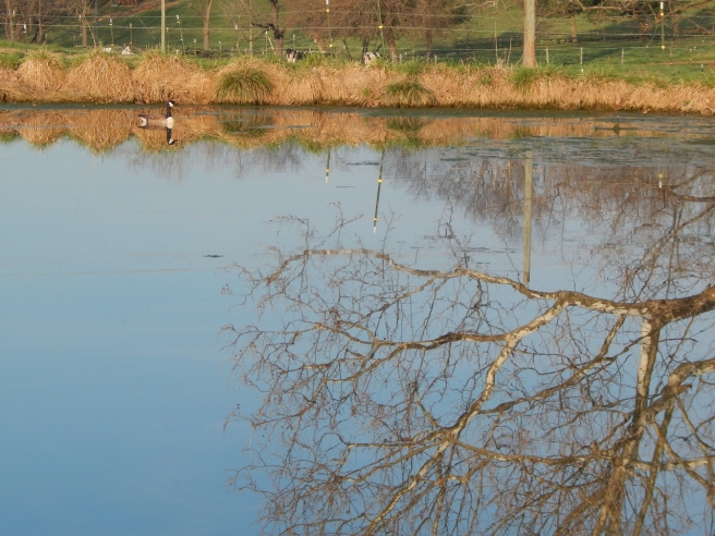 -Allison(pond, geese) 022 (1280x960)