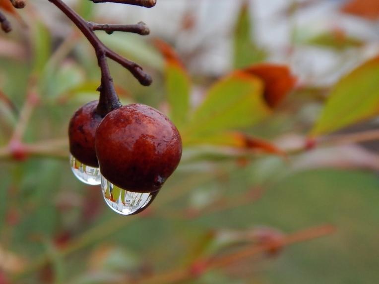 -Allison(dew drops, hat, nature walk, bunnies, cottonpile) 022 (1280x960)