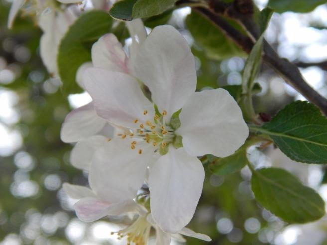 flowers (10) (1024x768)