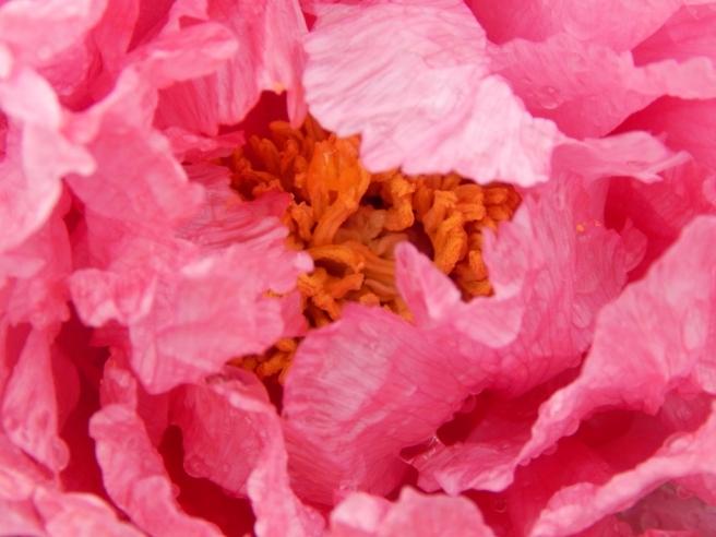 flowers (13) (1024x768)