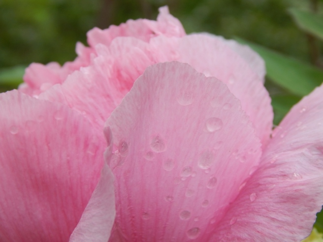 flowers (14) (1024x768)
