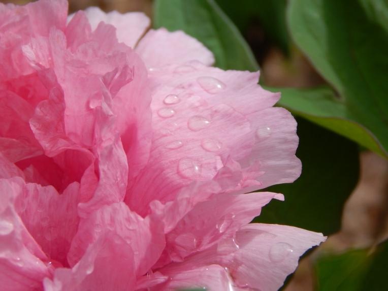 flowers (16) (1024x768)