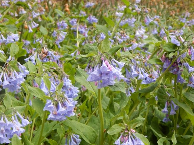 flowers (17) (1024x768)