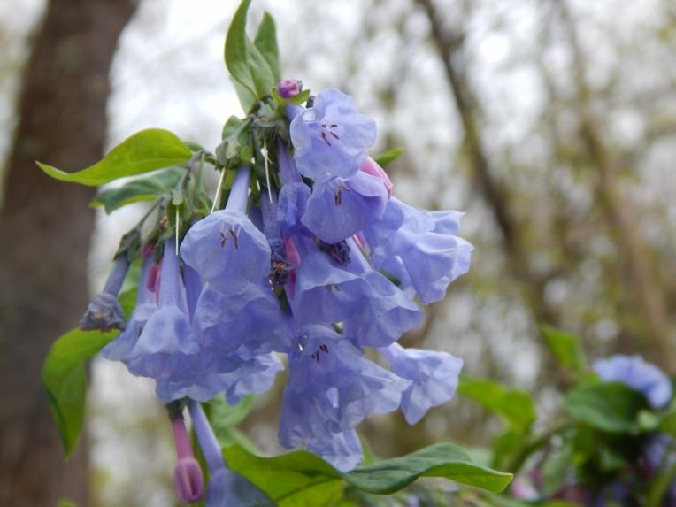 flowers (18) (1024x768)