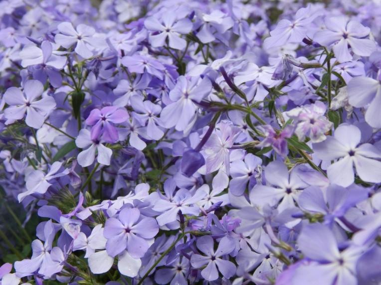 flowers (19) (1024x768)