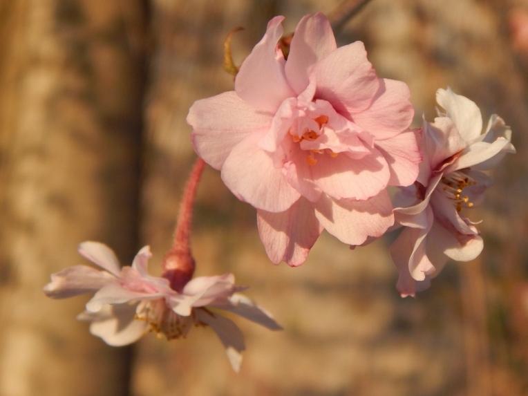 flowers (2) (1024x768)