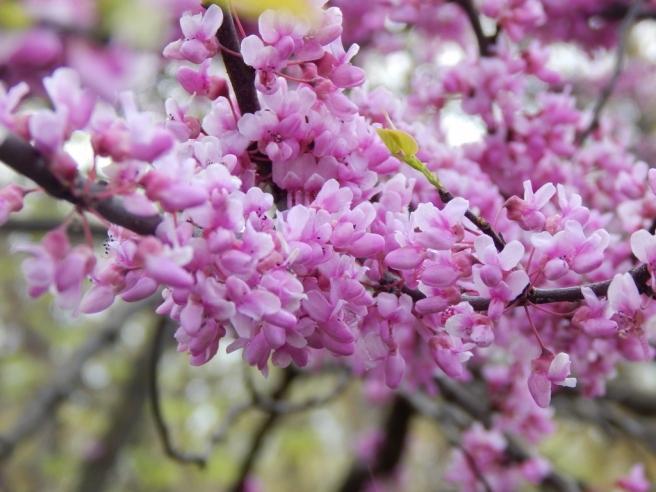 flowers (22) (1024x768)