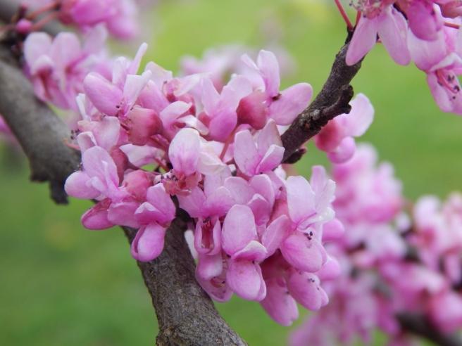 flowers (23) (1024x768)