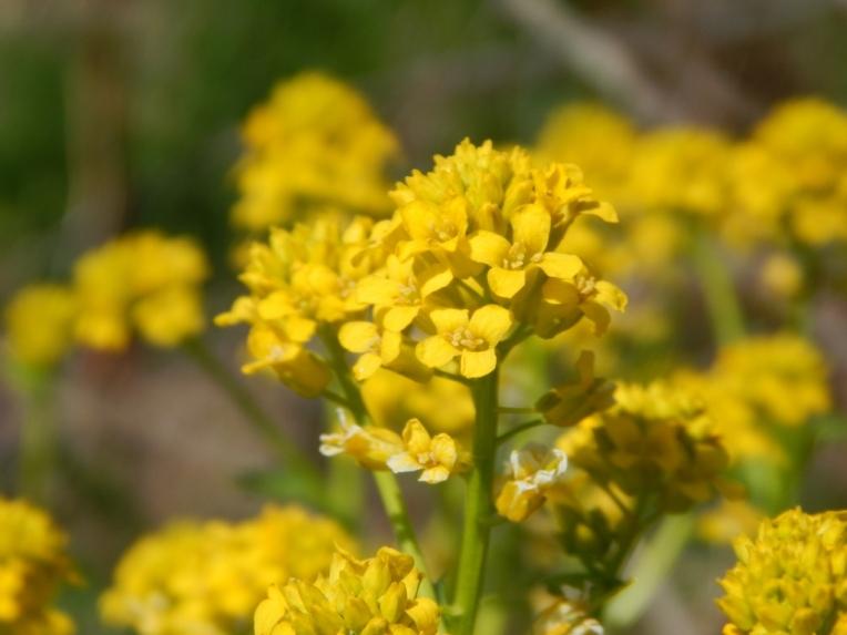 flowers (4) (1024x768)