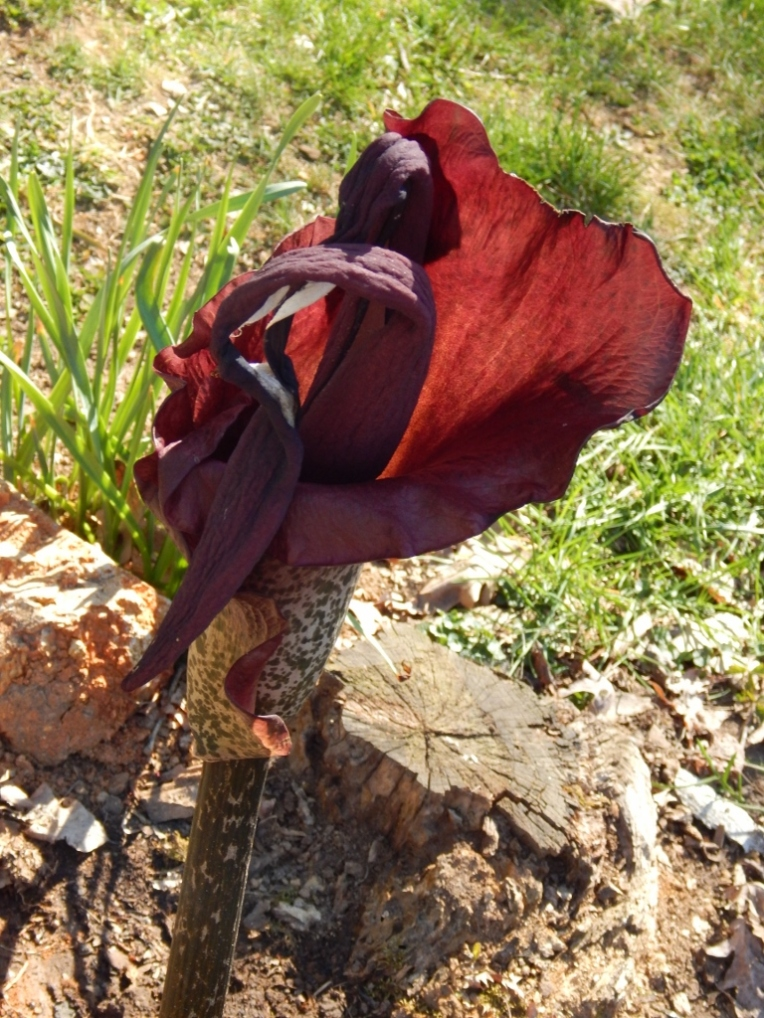 flowers (5) (768x1024)