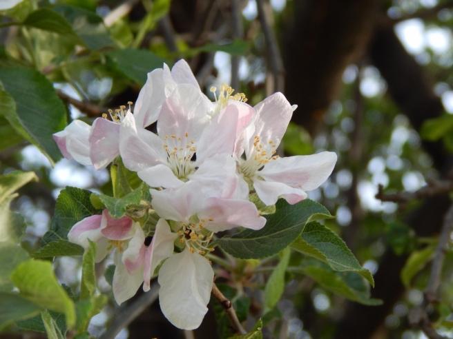 flowers (9) (1024x768)