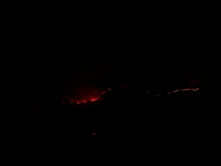 -Allison(arboretum, forest fire) 002 (1024x768)