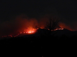 -Allison(arboretum, forest fire) 003 (1024x768)