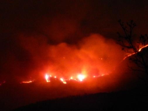 -Allison(arboretum, forest fire) 007 (1024x768)