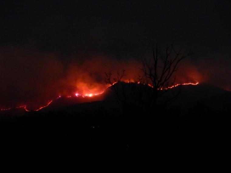 -Allison(arboretum, forest fire) 008 (1024x768)