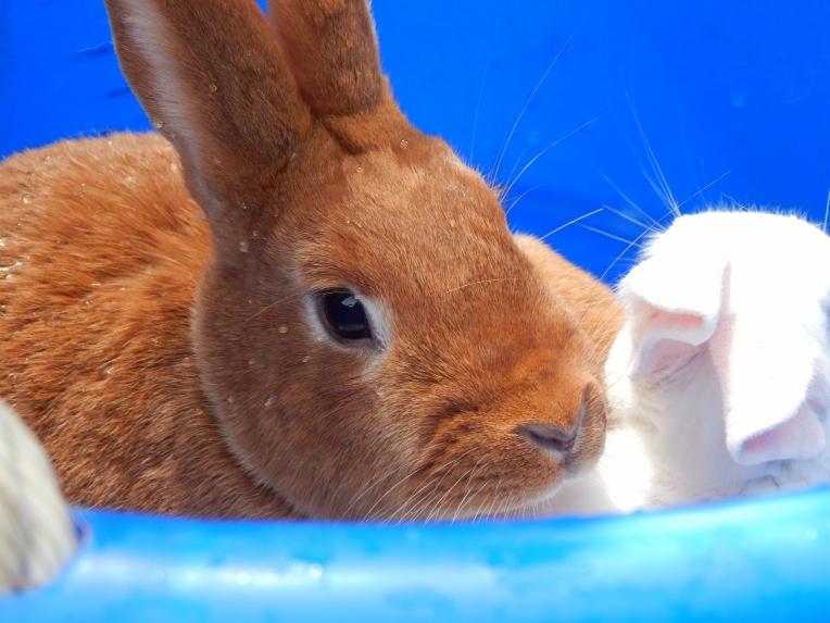 -Allison(birthday hike, bunnies) 192 (1280x960)