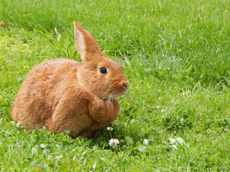 -Allison(birthday hike, bunnies) 193 (1280x960)