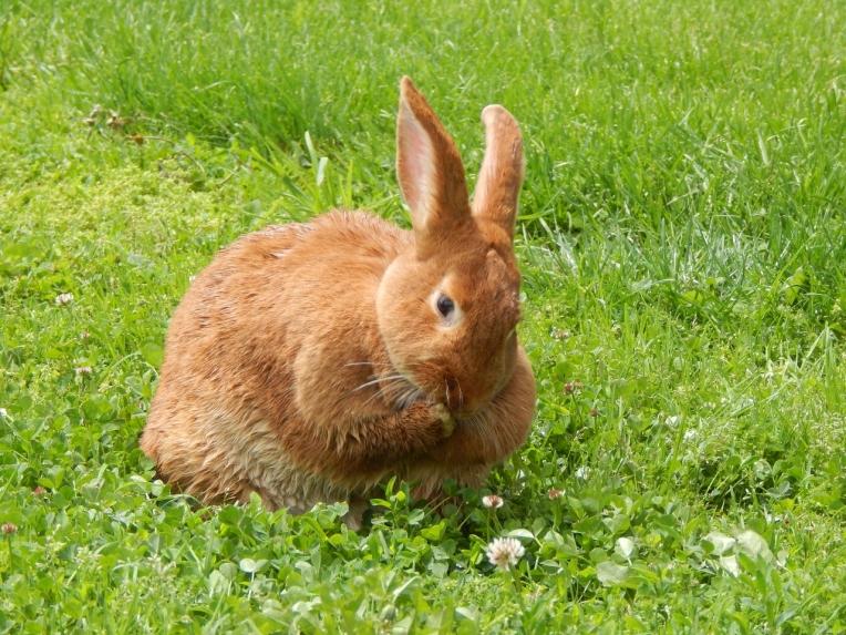 -Allison(birthday hike, bunnies) 194 (1280x960)
