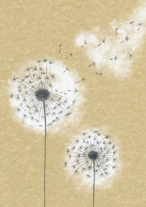 dandelion pic 2