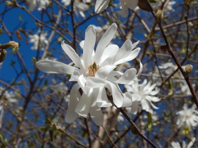 flowers (36) (1024x768)