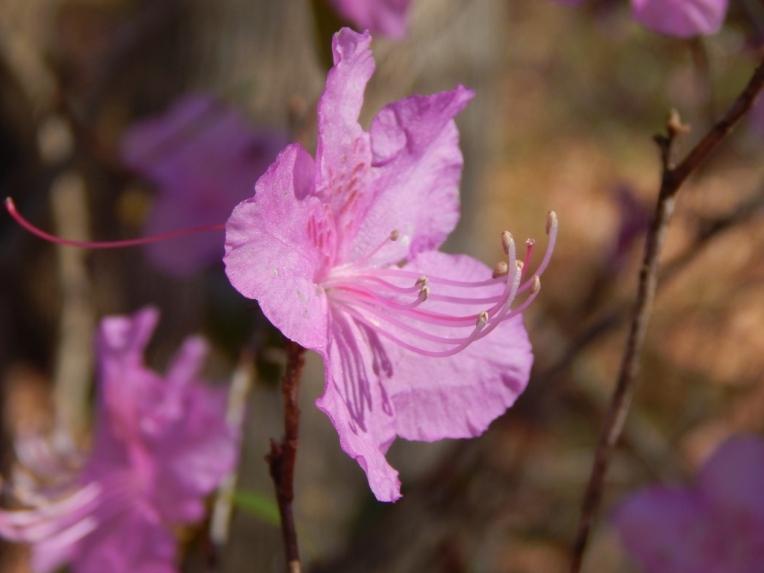 flowers (38) (1024x768)
