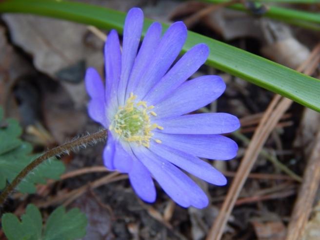 flowers (39) (1024x768)
