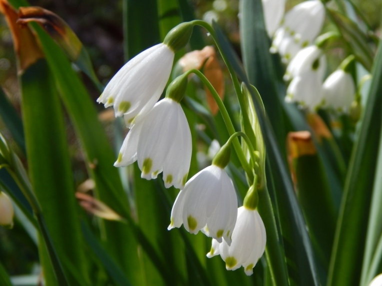 flowers (41) (1024x768)