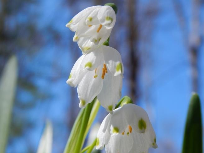 flowers (42) (1024x768)