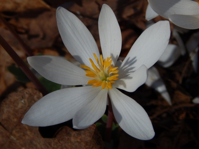 flowers (43) (1024x768)