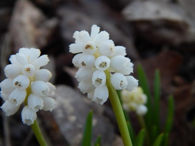 flowers (45) (1024x768)